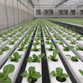 Hydroponic Nft Channel